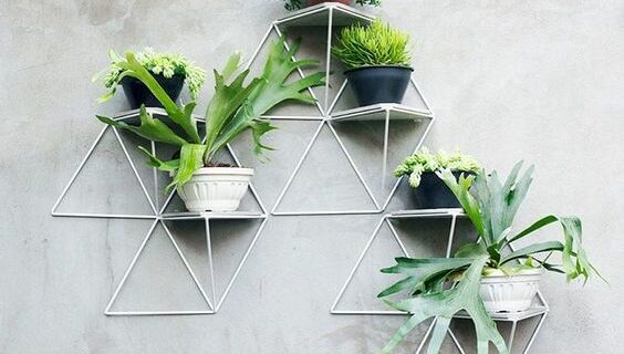 Recommend a tree for the wall of the house