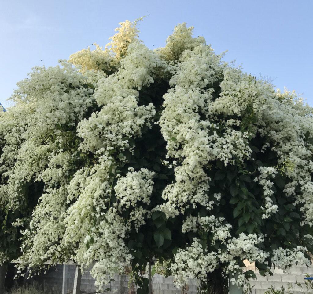 tree wall 7