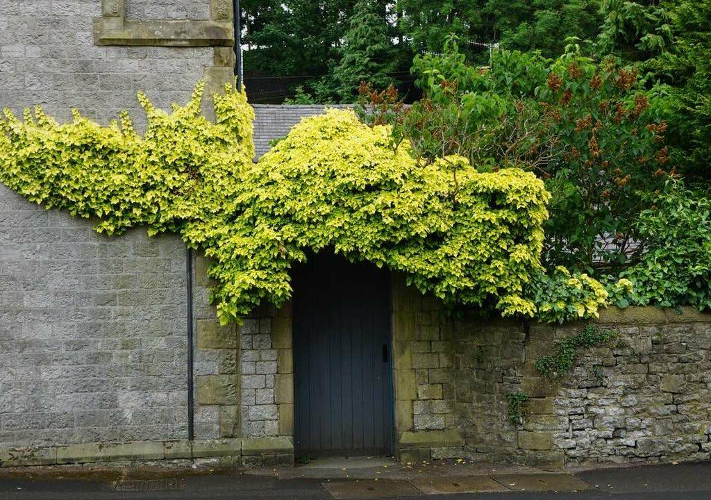 tree beside wall