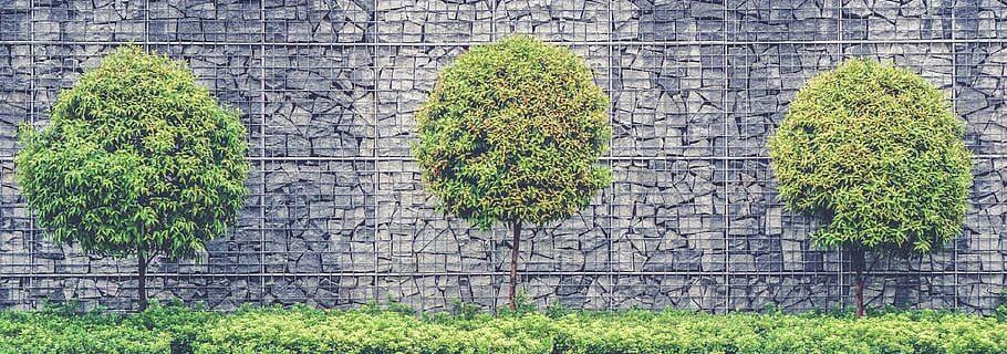 วิธีปลูกต้นไม้ติดกำแพง