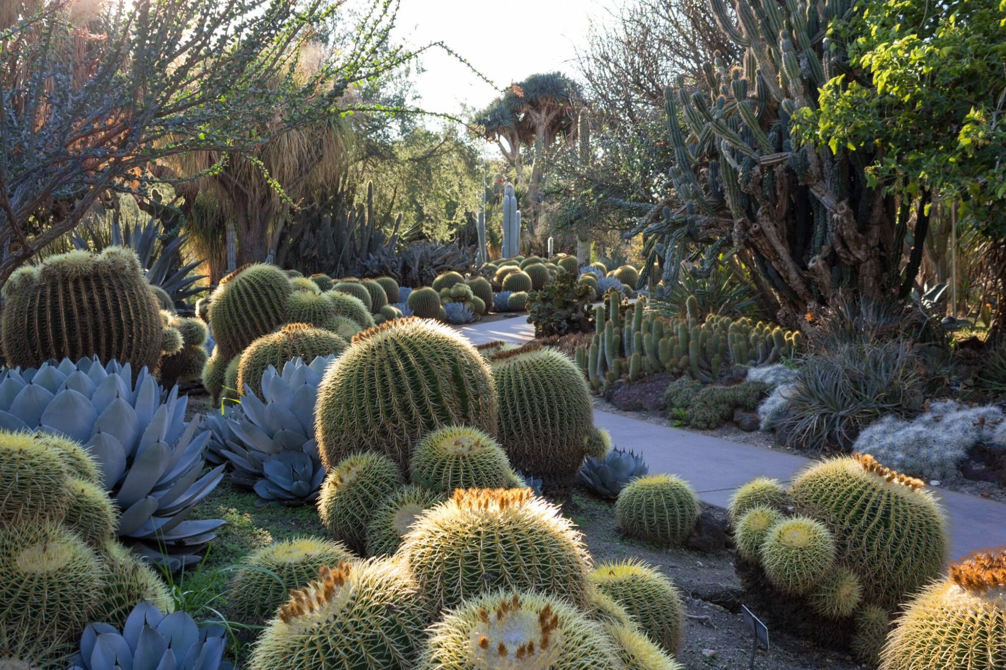 Guidelines for landscaping cactus gardens